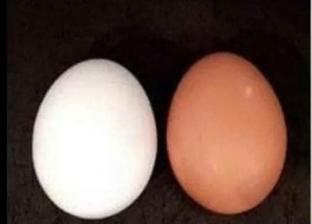الفرق بين البيض الأحمر  والأبيض