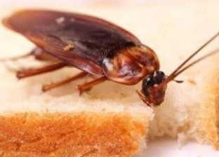 رق طبيعية تساعد في التخلص من الصراصير بالمنزل