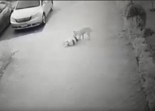 كلب ضال يهاجم طفلة