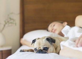دراسة: النساء يفضلن الحيوانات على الرجال في السرير: