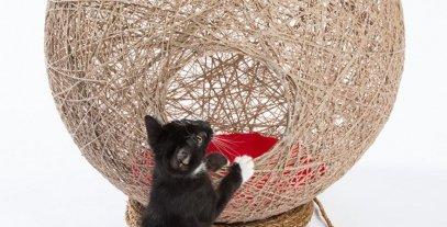ديكورات مميزة لقططتك في منزلك