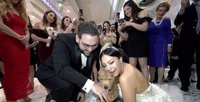 بالصور   جابلها كلب..  عريس أمريكي يفاجئ عروسته يوم الزفاف ويحقق حلمها