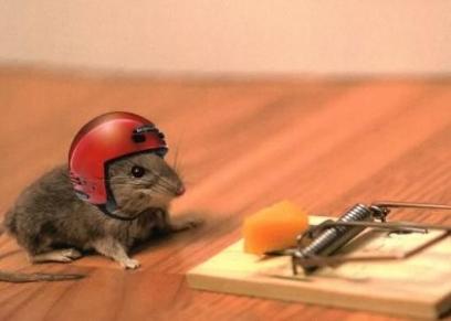 طرق التخلص من الفئران في منزلك.