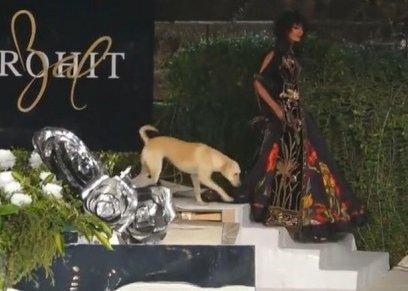 كلب يقتحم عرض أزياء في الهند