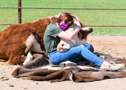 اليوم العالمي لتقدير البقر