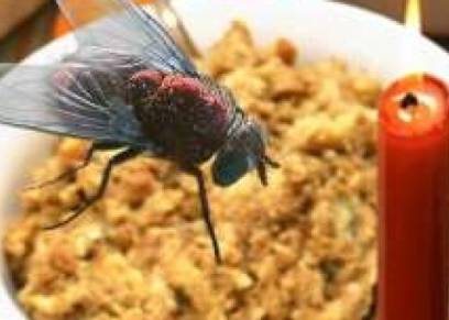 أضرار وقوف الذباب على الطعام
