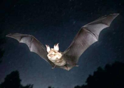 هجوم خفاش على طائرة
