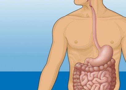 7 حقائق مدهشة عن الأمعاء التي تعتبر