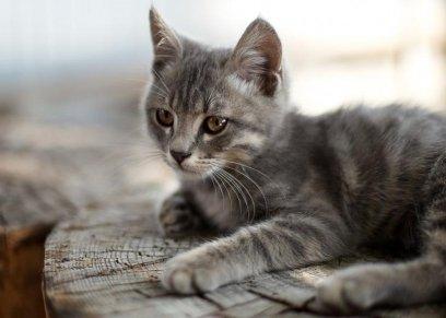 تربية القطط والكلاب تحمي الأطفال من خطر مرض منتشر