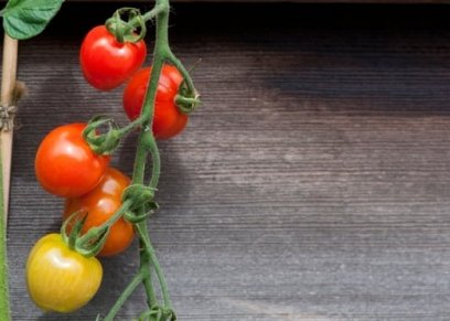 إليكِ طريقة تحضير عصير الطماطم مع السيقان