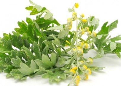 استخدامات نبات الشيح في علاج كورونا