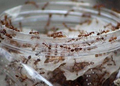 خبراء يكتشفون طرق للقضاء على النمل داخل المنازل بعيدًا عن المبيدات الحشرية