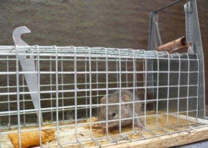 الفلفل الأسود والنباتات العشبية..طرق القضاء على الفئران داخل المنزل