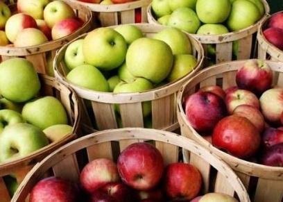 فوائد تناول التفاح على معدة فارغة