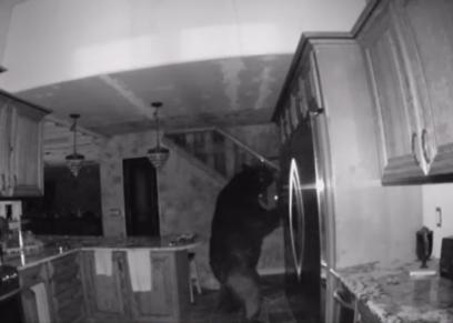 الدب خلال بحثه عن الطعام