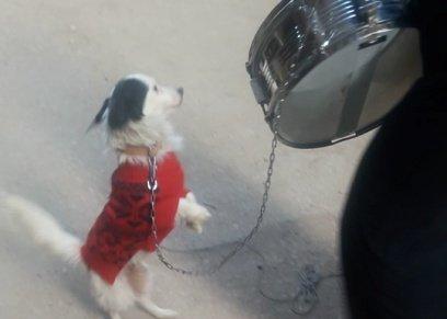 بالفيديو| «كلب وطبلة».. رأس مال «أم خالد» لقوت عيالها