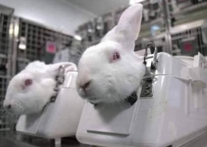 تجارب الأرانب