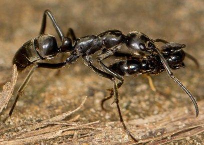 قتل النمل