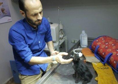 القطة بعد انقاذها