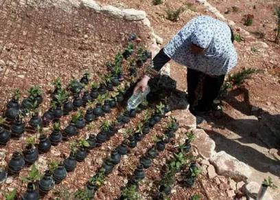 فلسطينية تزرع القنابل ورود