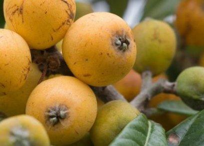 5 فوائد صحية من تناول فاكهة الأكيدنيا