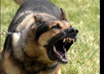 بالفيديو| «دقيقتان من الرعب».. أم تلقي بنفسها بين «كلاب شرسة» لحماية طفلها بمدينتي