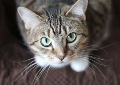 «قطة» تتسبب في خلع «نهى» لزوجها