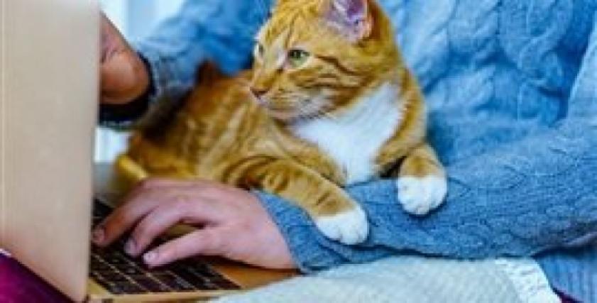 العمل من المنزل بالقرب من الحيوانات الأليفة يؤثر بشكل ايجابي على الصحة النفسية