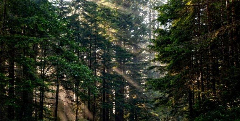 زوجان يعاقبان ابنهما بتركبة بمفردة بالغابة