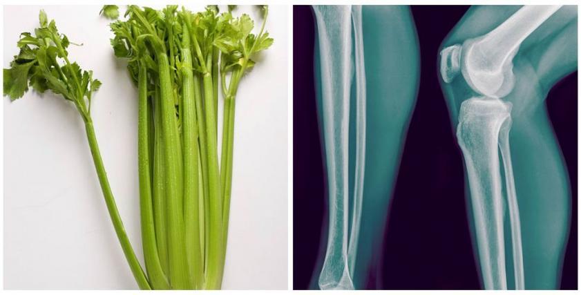 من شكل الطعام فوائد لأعضاء الجسم