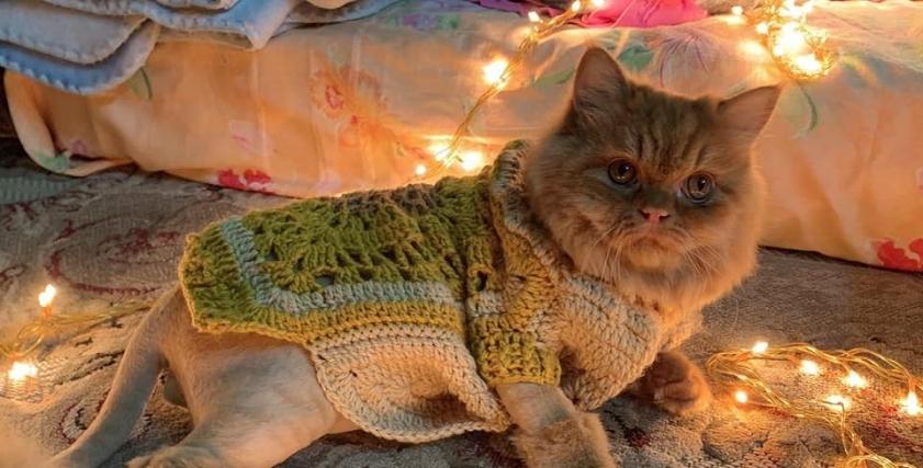 ملابس كورشيه للقطط
