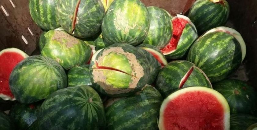 شكل البطيخ المسرطن من الداخل