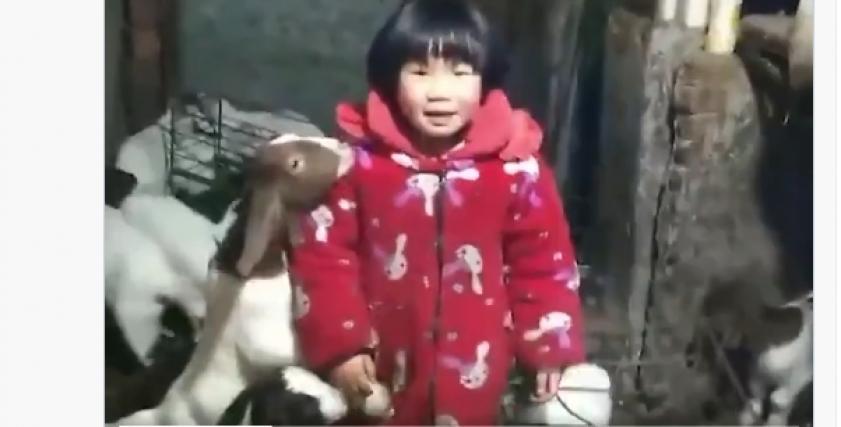 الطفلة وانوان الصينية