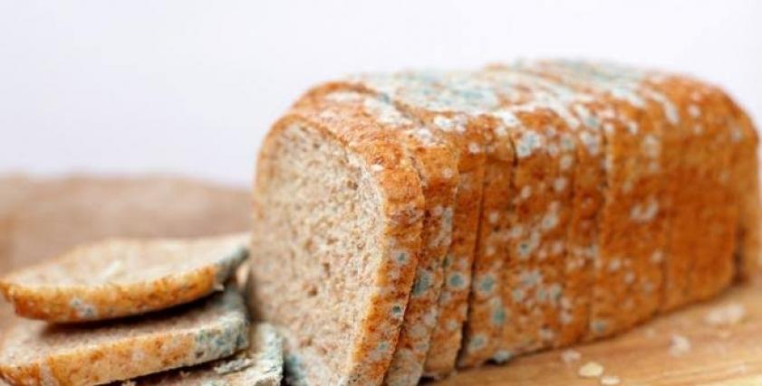 خبز متعفن