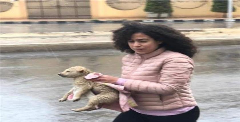 فتاة تنقذ كلاب صغيرة من الغرق بسبب الأمطار